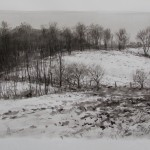 CATTLE TRACKS IN THE SNOW  SUMI INK  22X30  2013